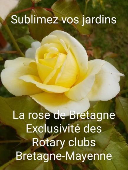 """Action """"Rose de Bretagne"""""""